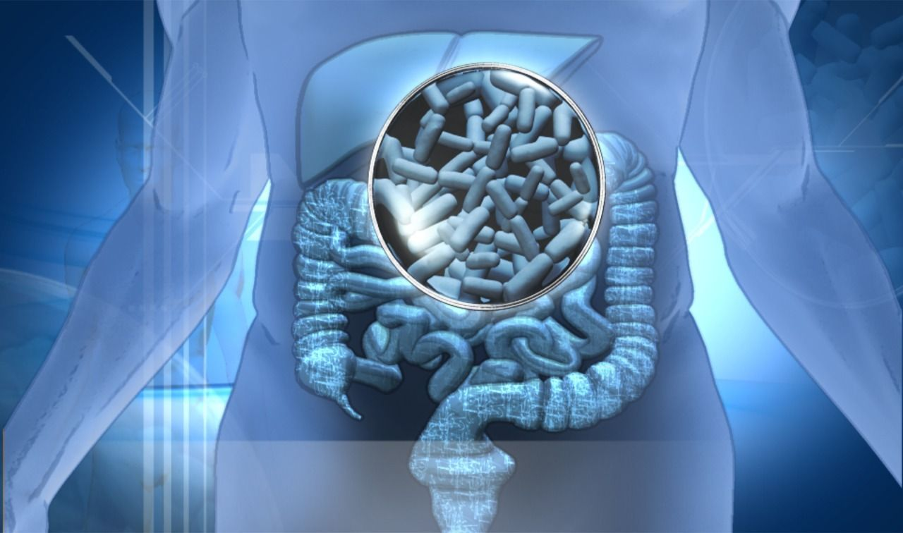 Alimentos-probioticos-en-el-organismo