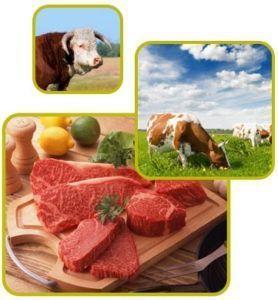 carne organica